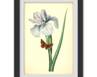 Flower print, a vibrant vintage botanical art print produced from a antique book plate, No 33,