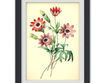 Floral Art print, pink red flowers, digital wall print botanical art, instant download printable art No 35