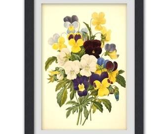 Vintage Botanical 37, a vibrant vintage botanical art print produced from a antique book plate.