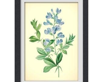 BLUE BOTANICAL PRINT, Blue flower digital art,  Floral art print, up cycled from a botanical bookplate, instant download,