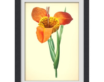 art print 44, 8x11 botanical art print produced from a vintage book plate.