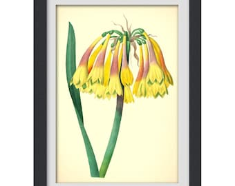 Yellow Botanical Wall Art, 8x11 wall art print produced from a vintage book plate, #50 DIGITAL DOWNLOAD