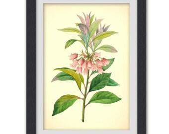 Pink flower botanical poster, Nature art print, botanical illustration digital download printable art no 57 botanical, vintage book plate.