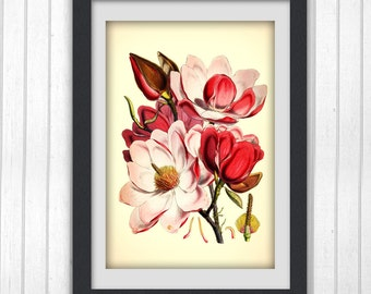Pink Botanical print 67, a botanical art print produced from an vintage book plate.