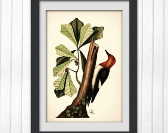 Nature illustration,  botanical art print produced from a vintage book plate, #72 INSTANT DOWNLOAD