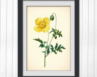 Yellow Rose, Redoute rose print, 8x10 Vintage botanical artwork produced from a bookplate, No 75