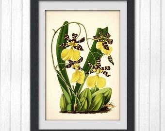 Botanical Art, Stunning Yellow flower, Digital Print #77 INSTANT DOWNLOAD