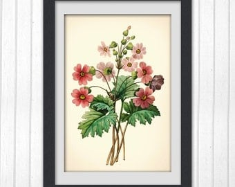 Digital Botanical Art Print 127,  produced from a vintage book plate, 8x11 wall art.