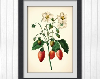 Fruit Print, a lovely red strawberry digital print, produced from a vintage book plate, 8x11 wall art, #154 INSTANT DOWNLOAD