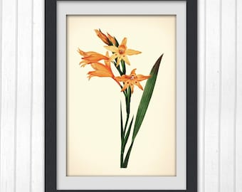 Orange Botanical Art, Floral art work, 8 x 10 botanical image from botanical bookplate, No 158 INSTANT DOWNLOAD
