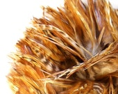 Natural Feathers / Ginger Chinchilla Rooster Saddle / 3 Inch Feather Length / 3 Inch Pre-strung Strip