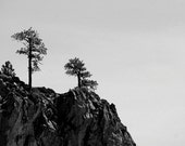 Black and White Trees on Mountainside, 8x10 print, Fine Art Nature Photograph