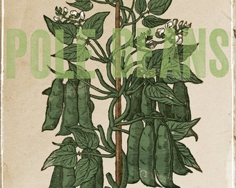 "Garden Pole Beans Green Woodcut On Antiqued Background Large 16"" x 20"" Canvas-Wrapped Frame: Two"
