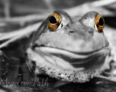 Frog, Black and White, Selective Color, Pond, Fine Art, 5x7 Photo, 'Amber-Eyed'