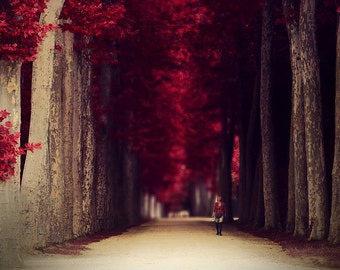 Red nature decor, red colors of autumn, surreal photo, red trees, alley in a park, almost any size print you can frame for your wall