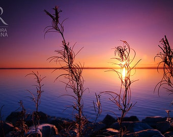 Nature decor, sunset wall art, Finland, sunset with plants in the foreground, print you can frame for your wall