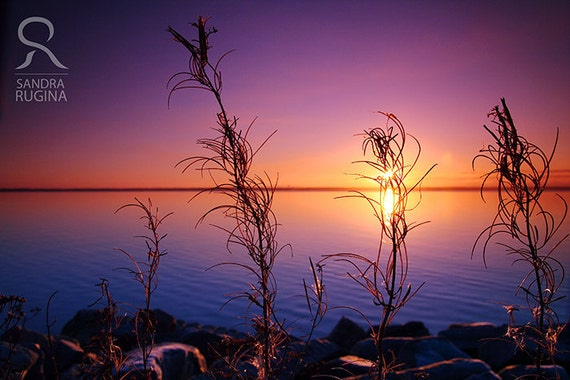 Dramatic sunset in Finland over a lake, with plants in the foreground, print you can frame for your wall