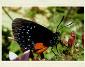 Black & Red Butterfly in the Garden handmade photo note card