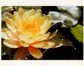 Yellow Water Lily & Butterfly handmade photo note card