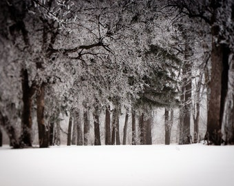 Winter Forest Photography Wall Art - Winter Wonderland Color Home Decor- Fine Art Landscape Photography