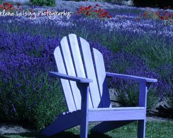 Lavender Photography, Purple Haze Farm, Washington, Nature Photography, Purple, Mothers day, Birthdays, Bedroom decor, Note Cards, Gift,