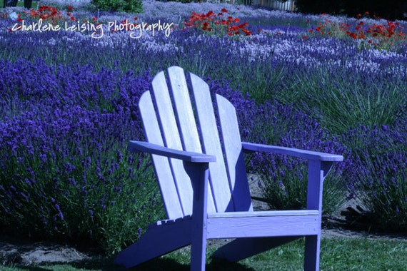 Lavender fields, purple, Adirondack chair, Washington, Purple Flowers, Mothers day, Birthdays, Girls Bedroom, Note Cards, Gift,