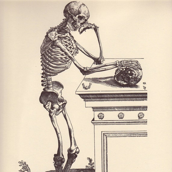 Vintage Anatomy Print, 1950 Skeletal Book Plate to Frame, Vesalius, Lateral View of the Skeleton