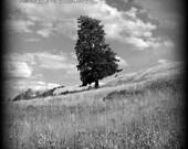Single Pine - Black and White Landscape Photography, nature, vintage, vignette