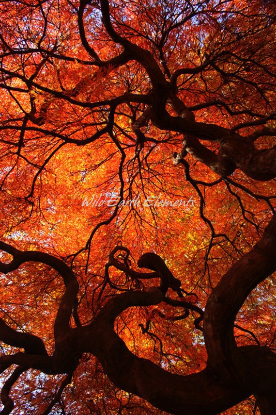 Items similar to Eloquence - Color Nature Photography, by ...
