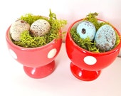 Mossy Bird Eggs On The Cups.