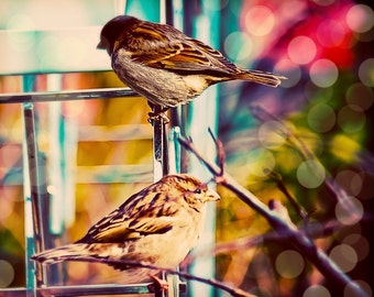 "16x20 photograph - ""Sweet Sparrows"" - fine art print - whimsical photography - New York Highline - two sparrows - pastels - dreamy"
