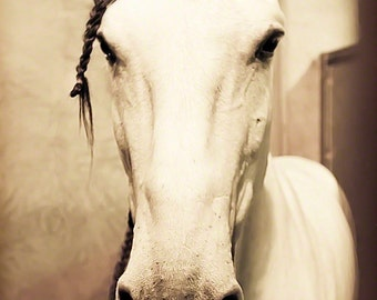 Horse Photograph - fine art print - 8x12 photograph - horse portrait - braided - nursery room - valentines day