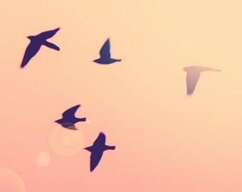 Flying Birds- 8x10 photograph - fine art print - sunset  - birds -