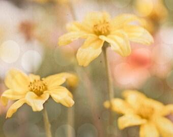 Soft Yellow flowers - 8x10 photograph -  fine art print -bokeh - nursery art - vintage