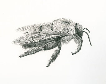 Honey Bee, 5 x 7 Giclée print of Original Pen and Ink Drawing by Lore Ruttan