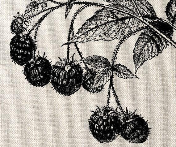 RASPBERRIES Instant Download, Digital Collage Sheet summer fruits clipart image transfer - digital download no.070