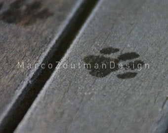 """Luna was here... - 8x8"""" photography print"""