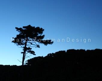 "Single tree - 8x8"" photography print"