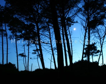 "See the moon though the forrest - 8x8"" photography print"