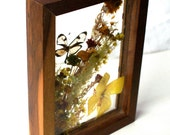 Vintage Glass Butterfly Shadow Box in Wood Frame - Made in Brazil