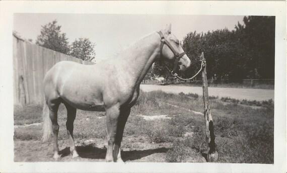 Roadside Attraction - Vintage 1950s Horse Photograph