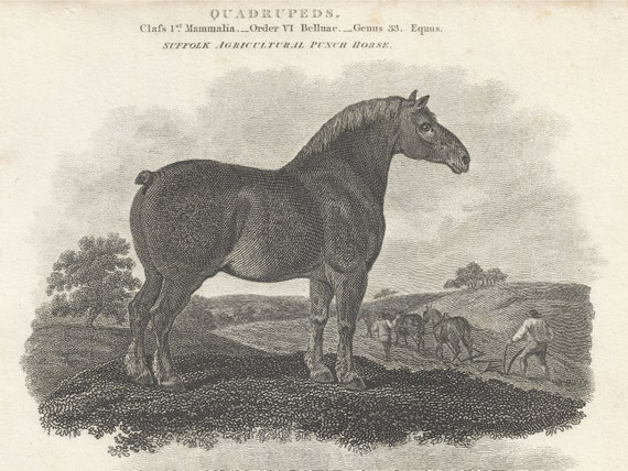 RESERVED FOR A - Quadrupeds, Suffolk Punch Draft Horse - 1808 Draft Horse Breed Book Plate