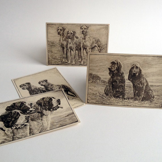 Bloodhound, St. Bernard, Great Dane and Irish Wolfhound vintage printed photo etchings from a 1930s card series of Dog Studies
