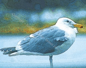 Sale 10 - Gull Blank Note Cards