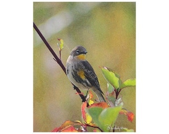 Sale 10 - Warbler Blank Note Cards