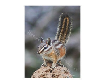 Sale - 10 Chippy On Rock Blank Note Cards
