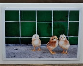 Three Chicks Photo Greeting Card