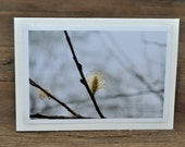 Winter Blossom Photo Greeting Card