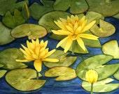 Yellow Waterlily Original Watercolor
