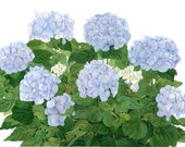 Blue Hydrangeas Watercolor Garden